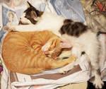 Napping Kitties