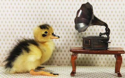 Duck Tunes