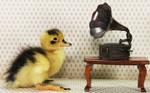 Duck Tunes by Innocentium