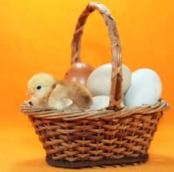 Chickie's Basket by Innocentium