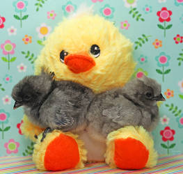 Chickies and Chick Plush