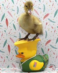Duckie and Rubber Duck Guile