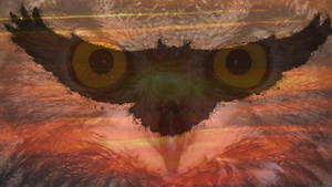Sunset Owl by Konack1