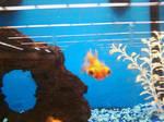 Big-Eyed Fish