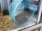 Sharing Hamsters