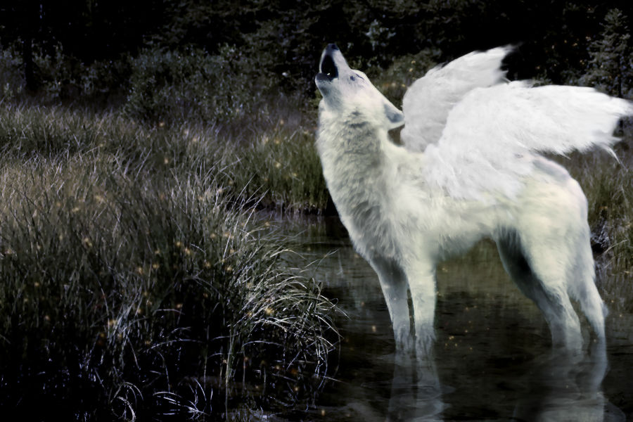 winged wolf.