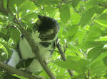 Tree Climbing Again by Cats-Are-Purrfect