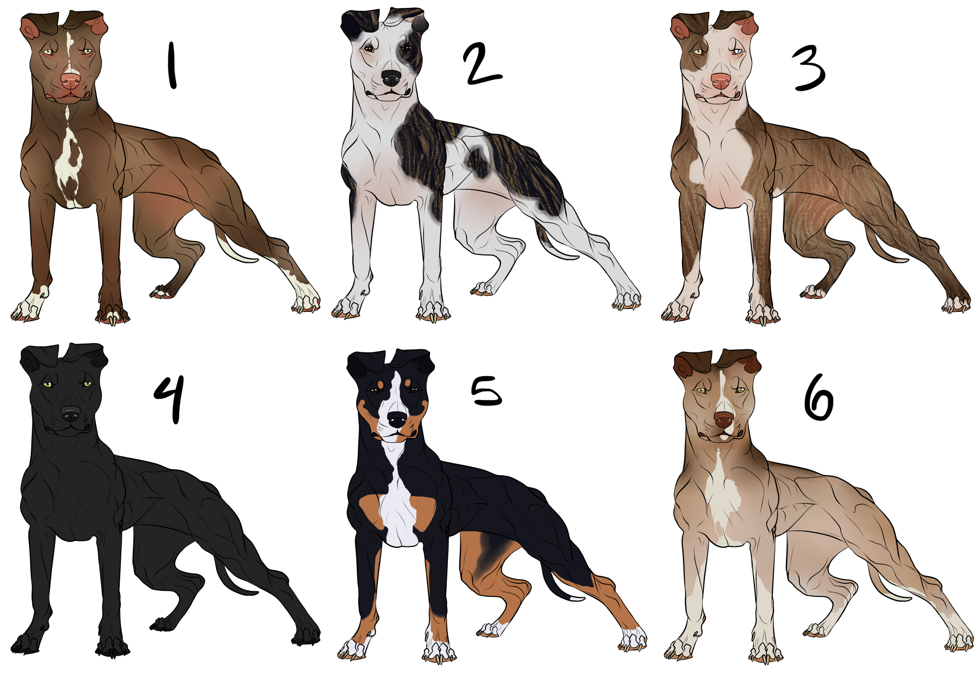 American Pit Bull Terrier Imports by CieloCadono on DeviantArt