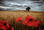 Poppy's in a storm by Mick75
