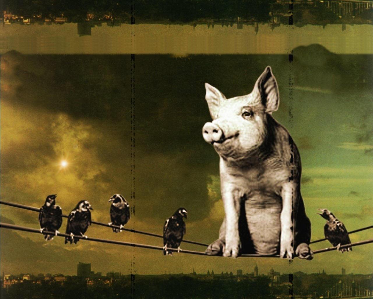 Pink floyd animals - Pink Floyd 46 Wallpapers Animals Wallpaper Pink Floyd