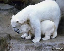 Unpolarized Bears by Ray-Harmacinski