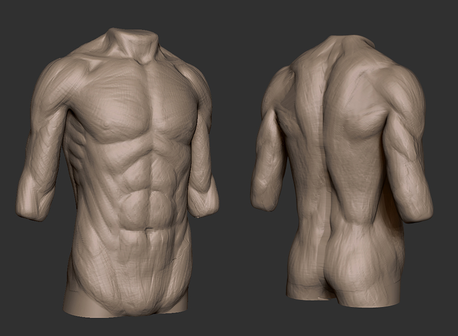 Torso Anatomy Study By Patrickvanr On Deviantart
