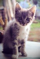 Kitten by Jessi-myth