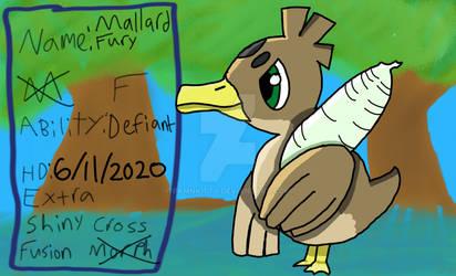 Mallard Fury
