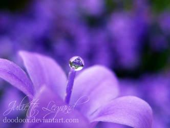 Deep purple dream by Doodoox