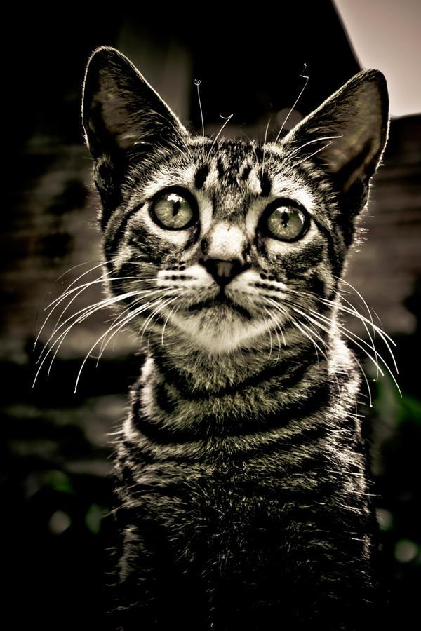 the cat by pocortodox0