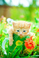 kitty in the garden 2 by MotyPest