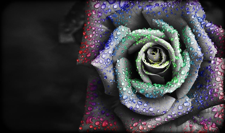 Chroma Ribbon Rose by StevenLeonCooper