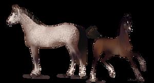 Foal Design
