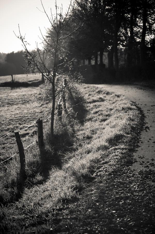 walk around by barissuer