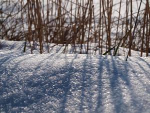 Snow Light II