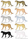 Cheetah Color Mutation Guide