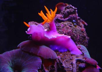 Nudibranch's Triumph by cheneym