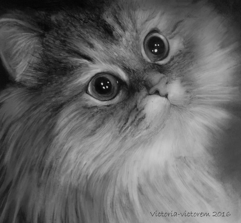 Cat by Victoria-victorem