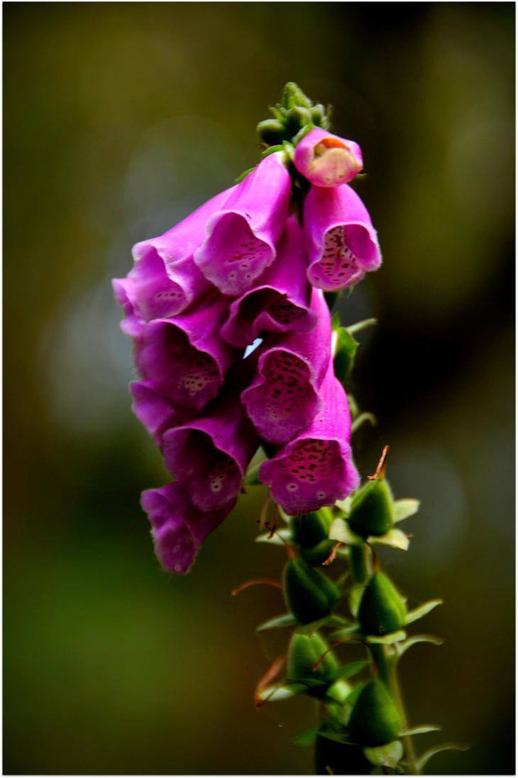 Purple Bell Flowers By Chrobal On Deviantart