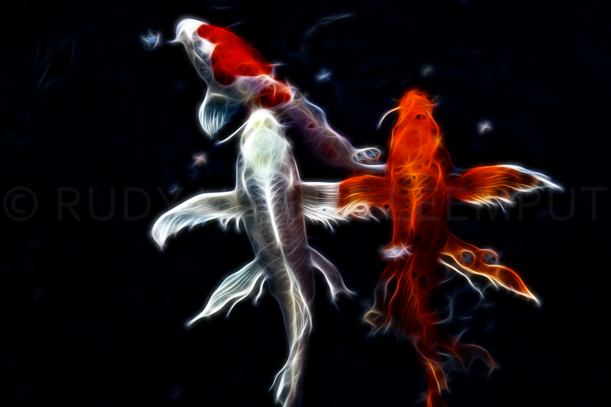 Koi carp art by rudigi art on deviantart for Koi japanese art