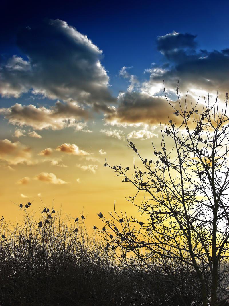 A Tree full of Birds by Kaddayah