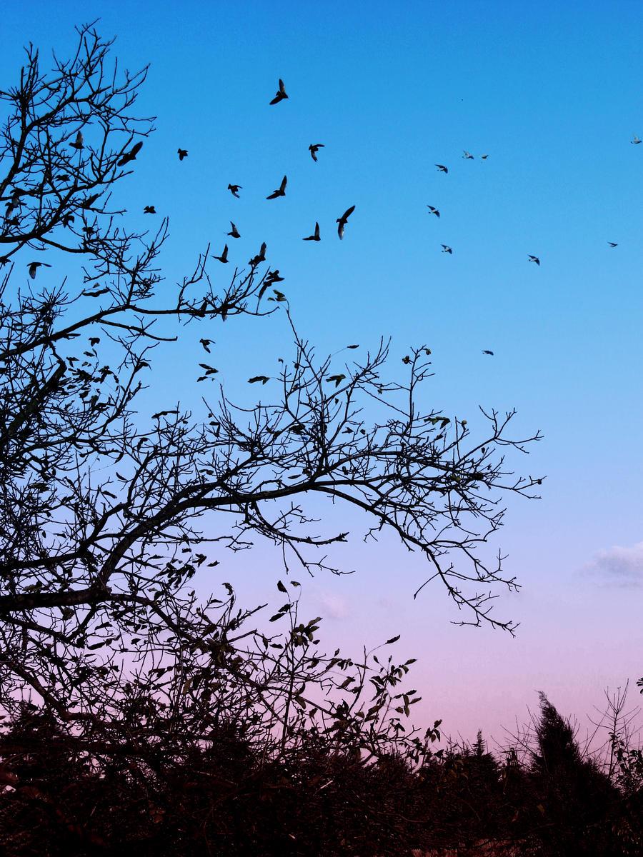 Night Fliers by Kaddayah on DeviantArt