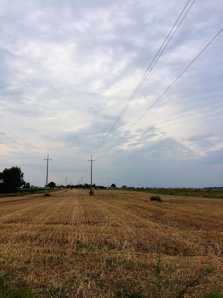 Fields by Kaddayah