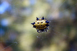 Little Spider by Ribbitt