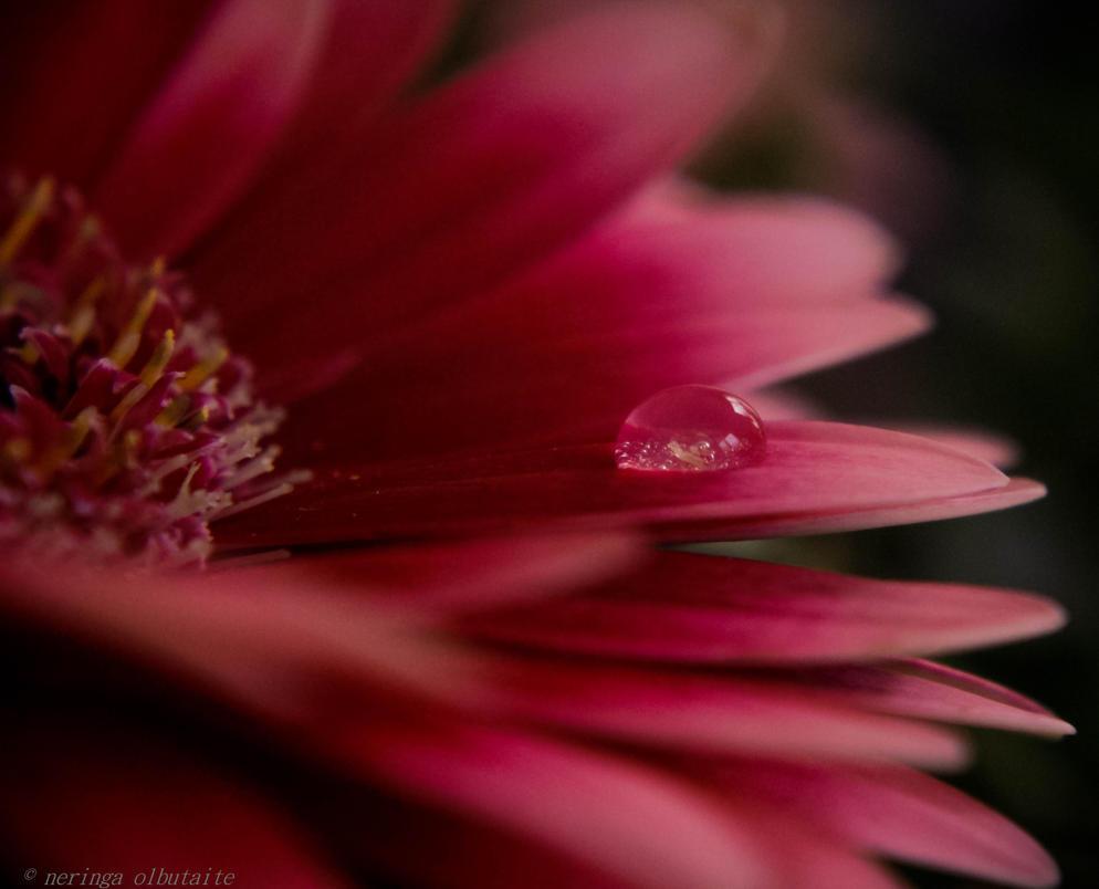 little flower by neringa02