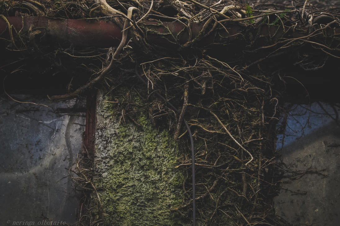 poison ivy by neringa02