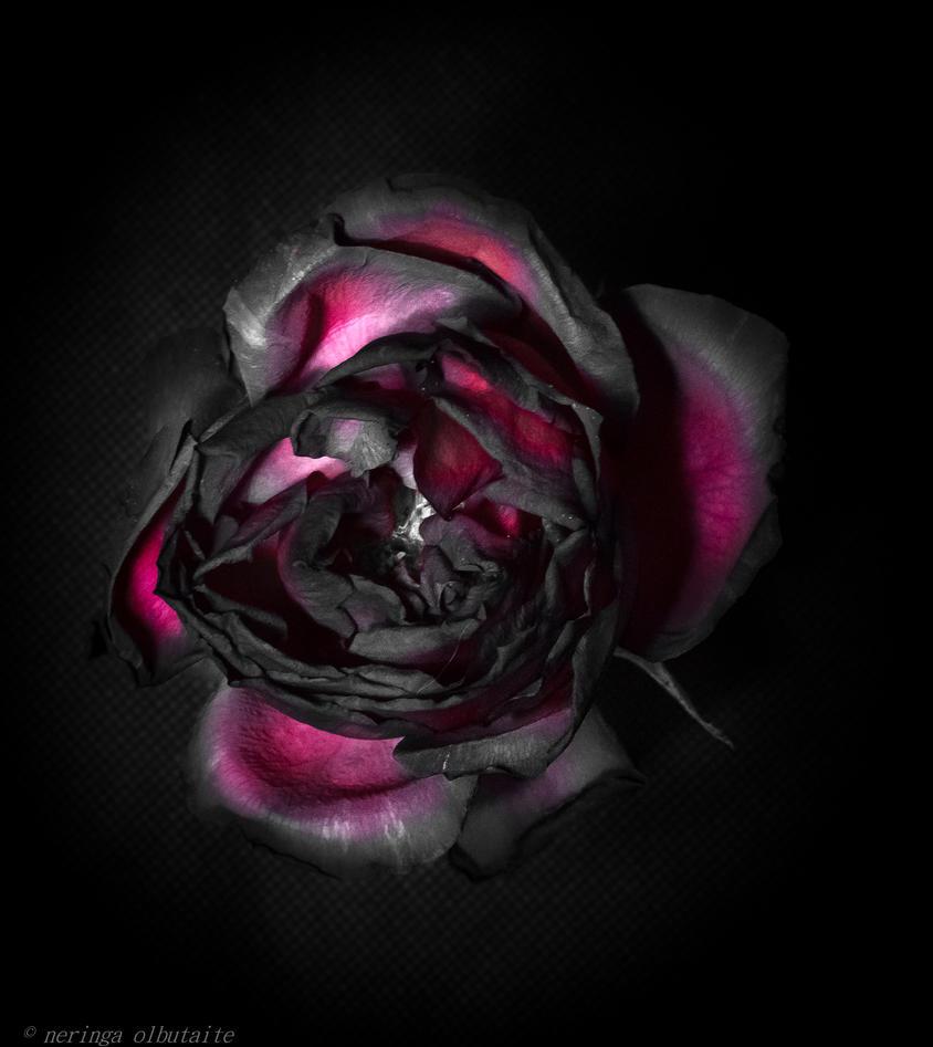 blush by neringa02