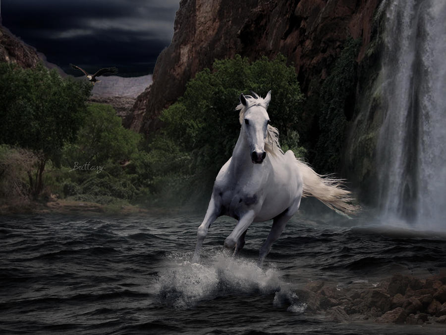 BubblesLegacy's horses White_horse_by_brittanyblackrainbow-d39zcmp