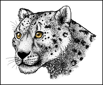 Paint Snow Leopard colored by RedStitches