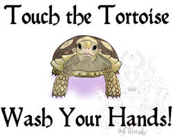Touch the Tortoise