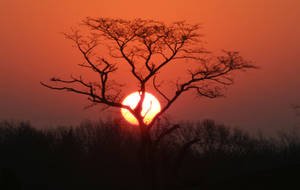 Sunrise by steveoshaug