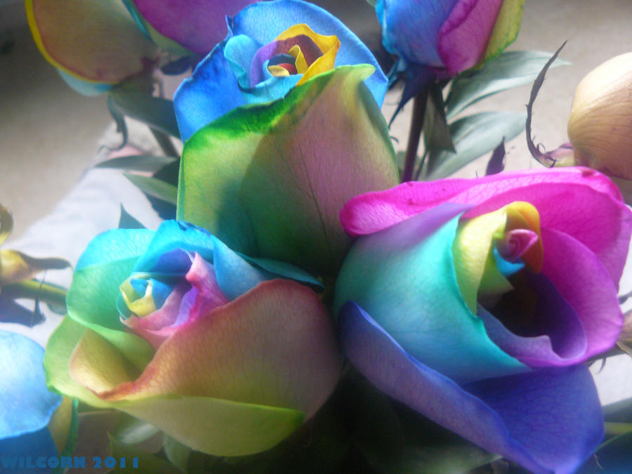 Rainbow rose 7 by wilcorn on deviantart for Where to find rainbow roses