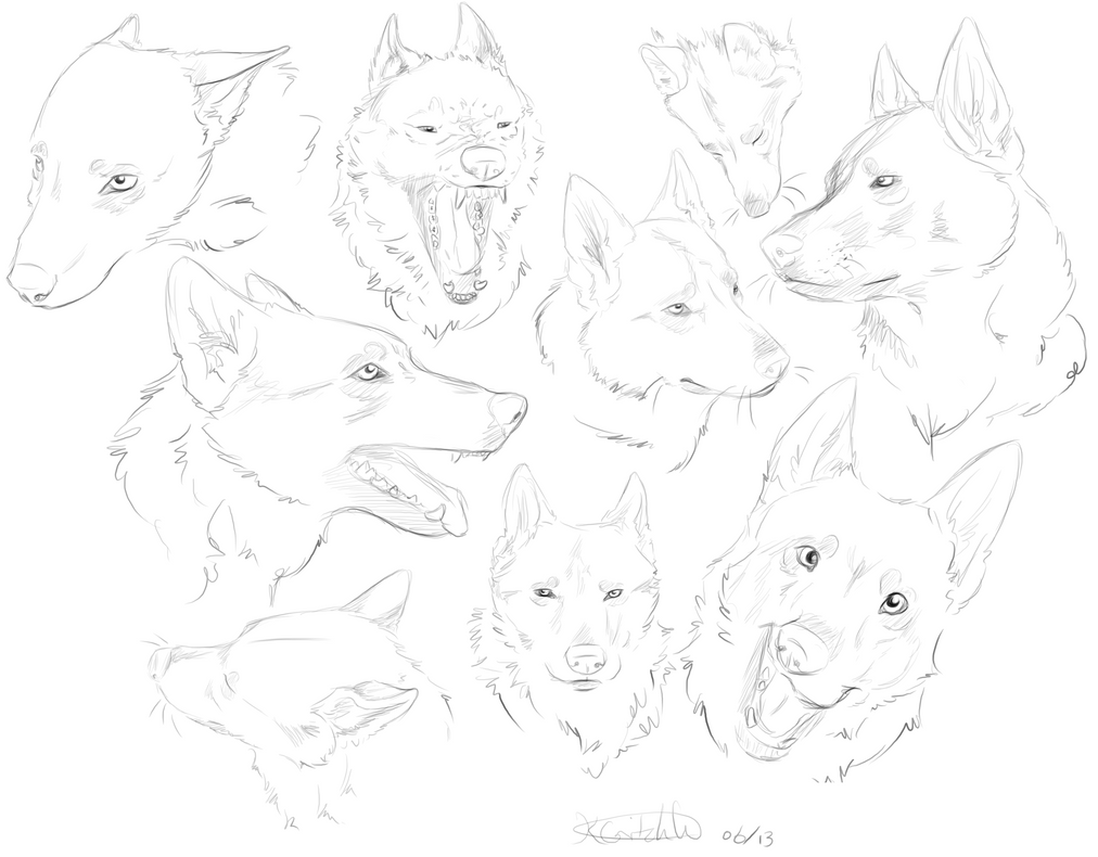 Wolves   Head Sketches...