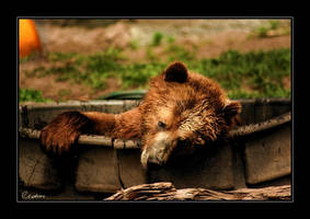 Bear by cedrus
