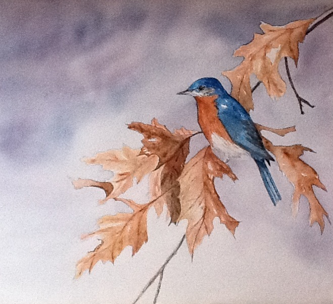 Eastern Bluebird by Jiuhl