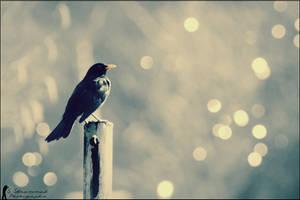 Bird :D by Dj-TheKiller
