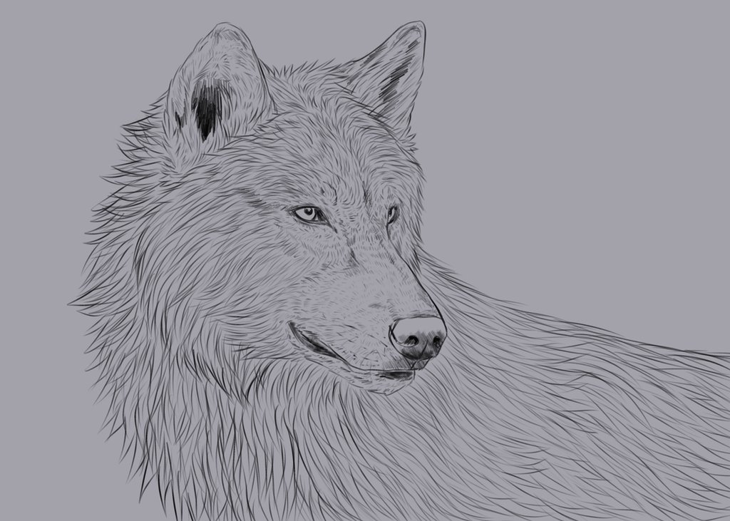 Wolf Portrait (Brush Test) by nihtgield
