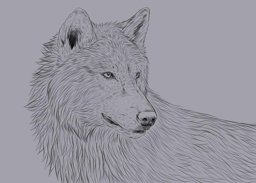 Wolf Portrait (Brush Test) by nihtgield
