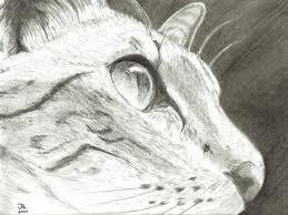 Cat drawing by yellowfang1999