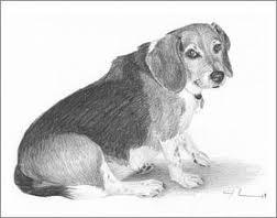 Dog drawing by yellowfang1999